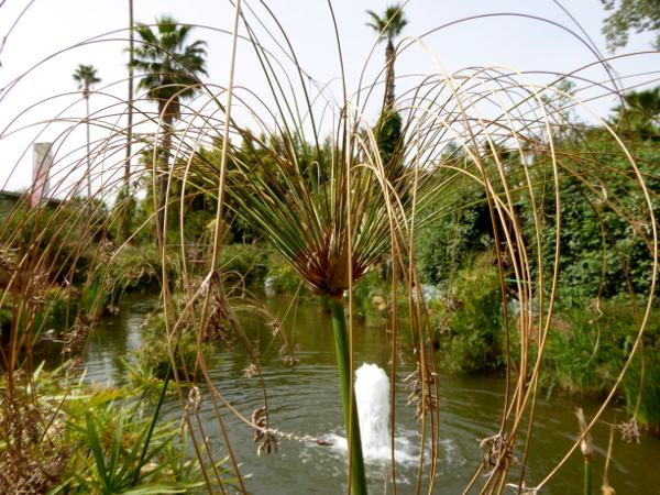 anima garden pflanze teich gärten freibeuter reisen marrakesch