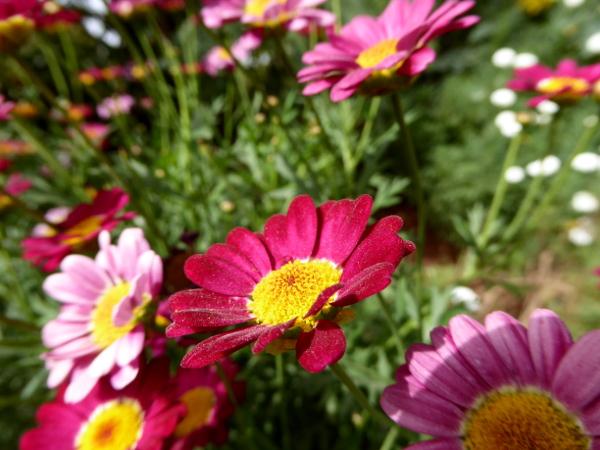 blume rosa pink gaerten marrakesch anima garden andre heller freibeuter reisen