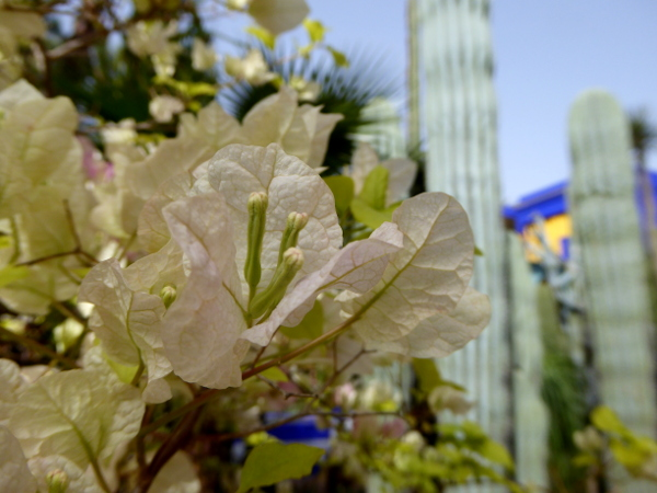 jardin majorelle yves saint laurent Marrakesch freibeuter reisen