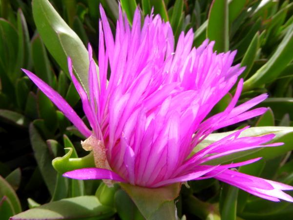 lila blume gaerten anima garden andre heller marrkech freibeuter reisen marokko