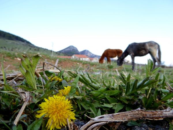 pferde koppel vratsa bulgarien natur freibeuter reisen