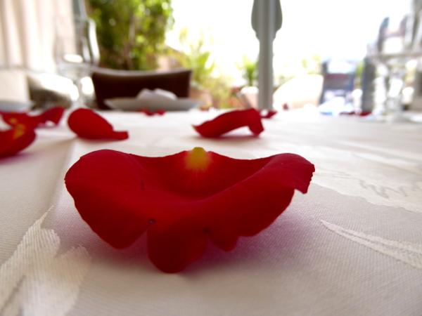 rosenblatt marokkanisch freibeuter reisen