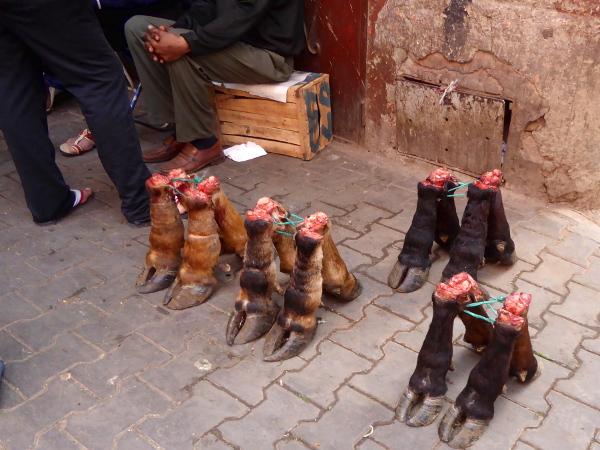 suq fuss rinder marrakesch freibeuter reisen