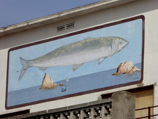 anchovis escala soles anxovis sardelle bild am haus freibeuter reisen