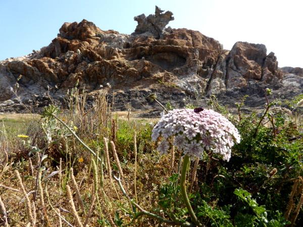 adler fels cap de creus naturpark pla de la tudela freibeuter reisen