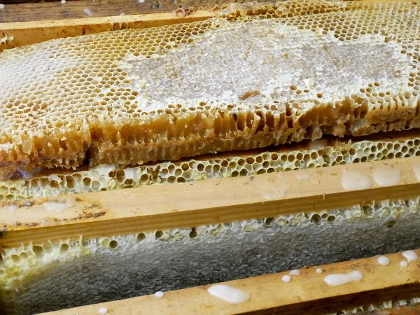 mel de ribes honig aus dem vall de ribes freibeuter reisen