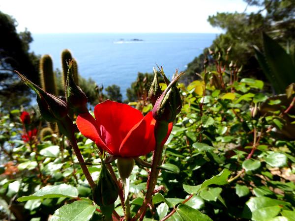 cap roig botanischer garten