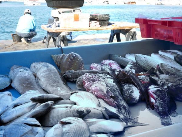 fische im hafen von marseille freibeuter reisen
