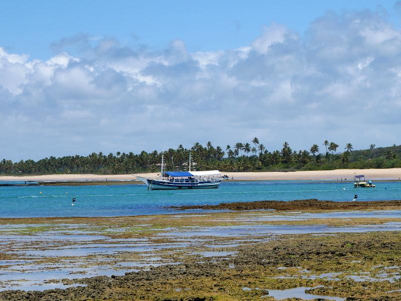 wale beobachten praia do forte freibeuter reisen