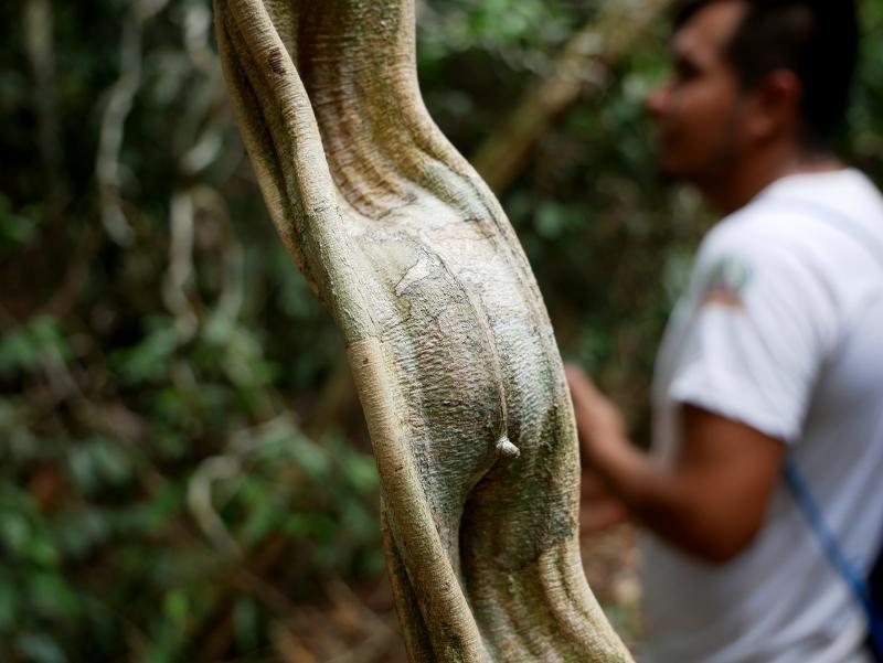 regenwald pflanze freibeuter reisen