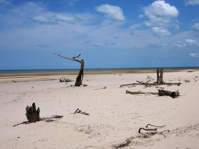 strand jamaraqua regenwald amazonas