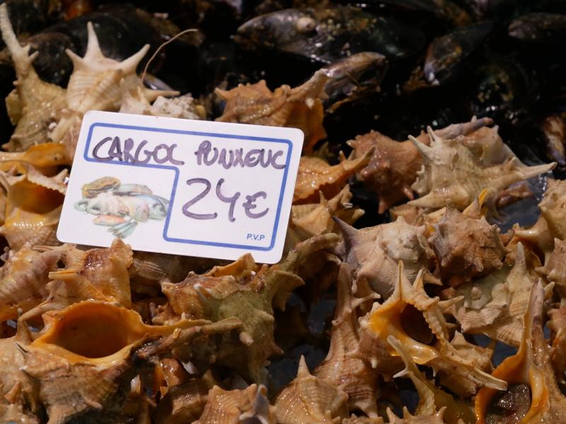 palamos schiffe hafen fischmarkt cargol