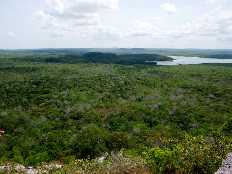 regenwald amazonas alter do chao