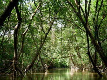 Mangroven Furo do Miguelão