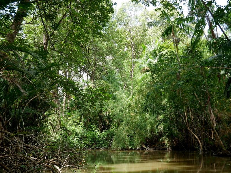 Mangroven Kanal grün açaí Beere Furo do Miguelão Brasilien Amazonas