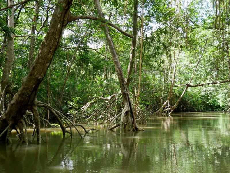 Furo do Miguelão Amazonas