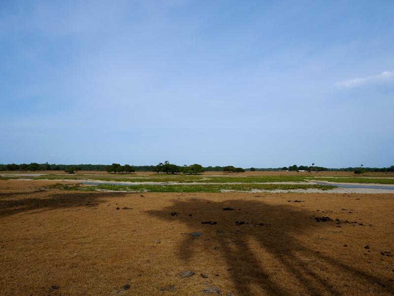 ranch wasserbüffel Insel ilha Marajó