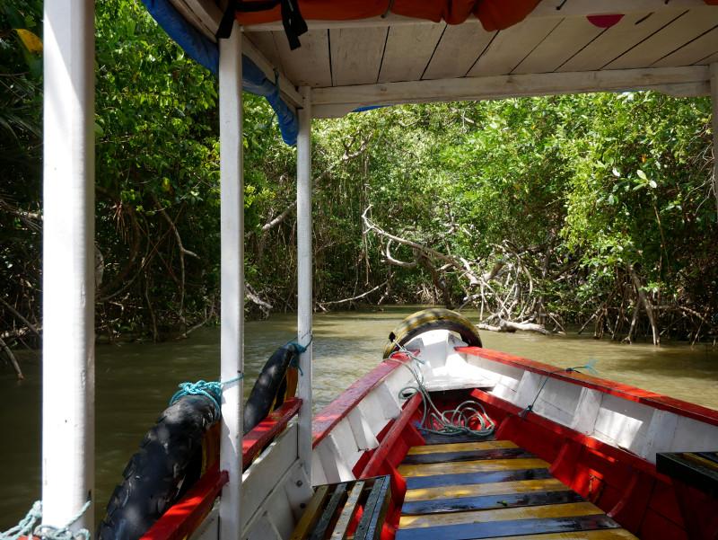 Mangroven Kanal grün açaí Beere Furo do Miguelão Brasilien Amazonas Boot