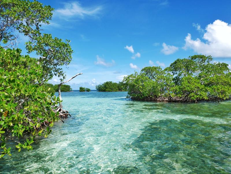 Mangroven Saint Rose guadeloupe