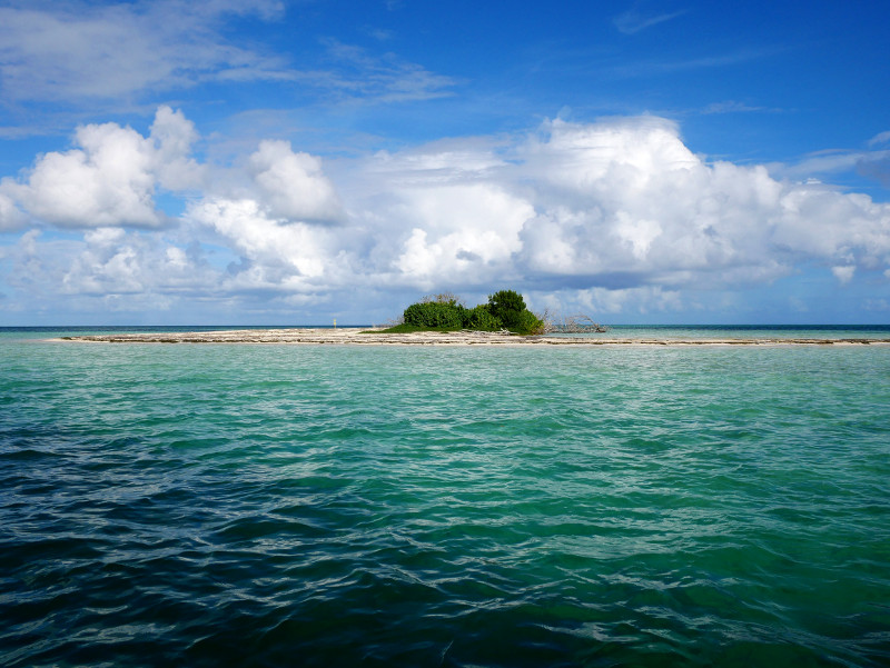 guadeloupe insel mangroven wald karibik