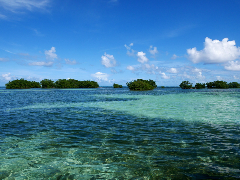 mangroven guadeloupe karibik