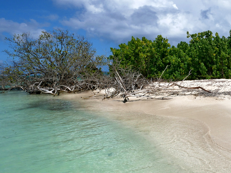 mangroven insel lagune guadeloupe saint rose