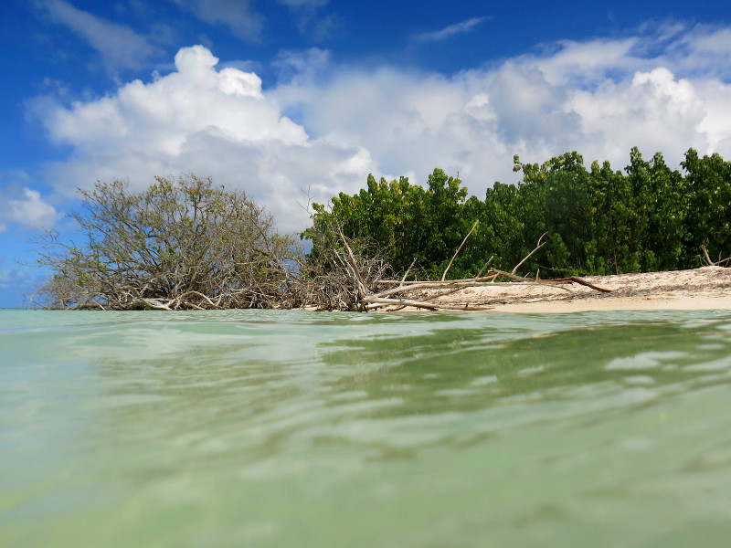 mangrovenwald insel guadeloupe karibik