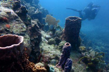 korallen gorgonien guadeloupe reserve cousteau