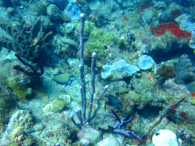 guadeloupe reserve cousteau meerspflanzen