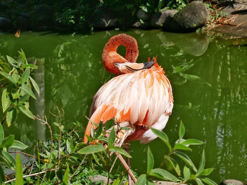 rosa flamingo guadeloupe sehenswürdigkeiten auf guadeloupe