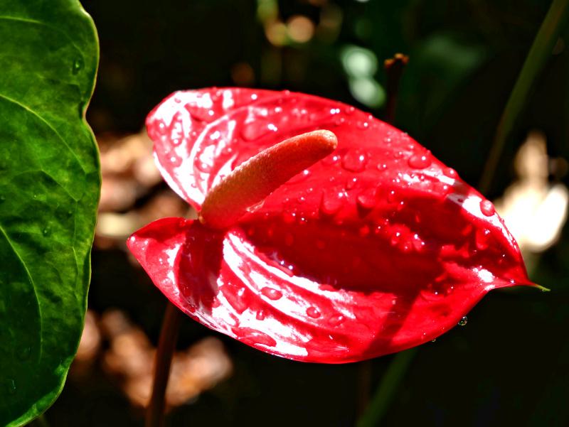 sehenswuerdigkeiten guadeloupe botanischer garten jardin botanique