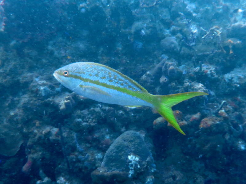 fisch guadeloupe reserve cousteau