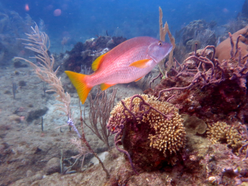 tauchen guadeloupe reserve cousteau
