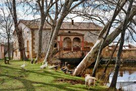 alte muehle hund-castell del remei siedlung