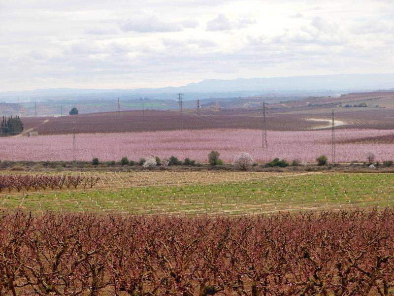 frucht tourismus Pfirsich Bluete Aitona