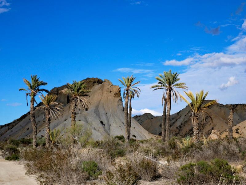 palmen desierto tabernas