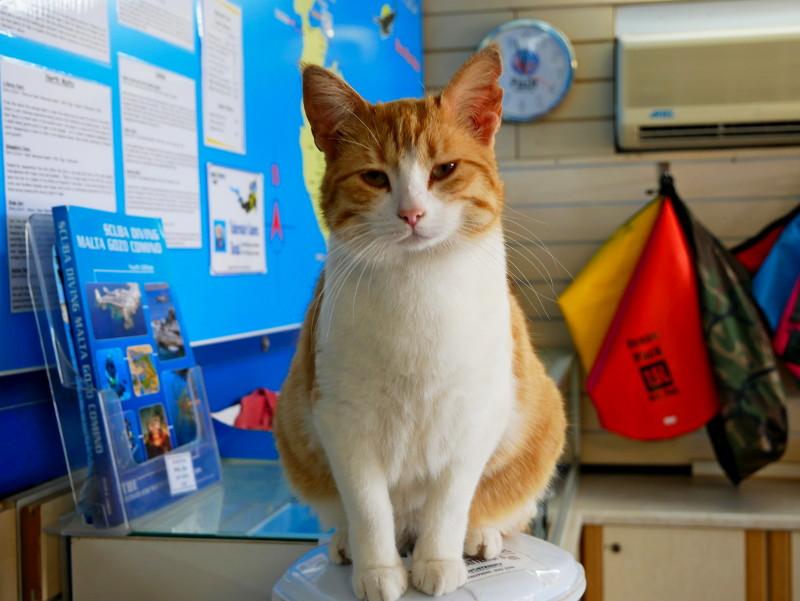 Tauchen auf Malta Katze Aquaventure