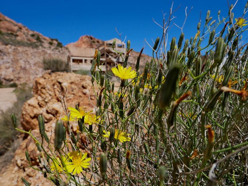 planta denver goldmine cabo de gata
