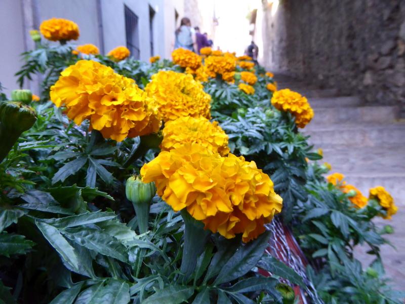 Temps de Flors – Girona