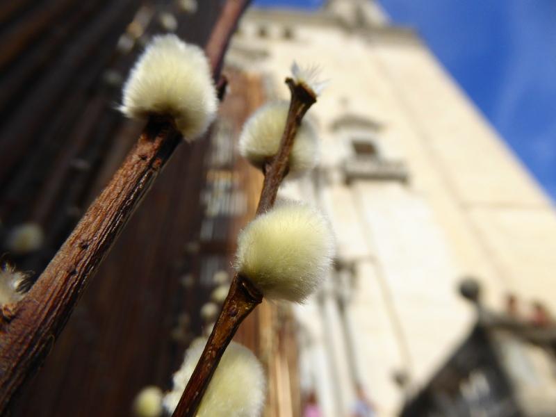 kathedrale weidenkätzchen Temps de Flors – Girona