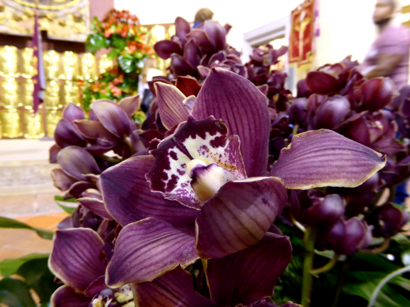 Temps de Flors – Girona lila blume