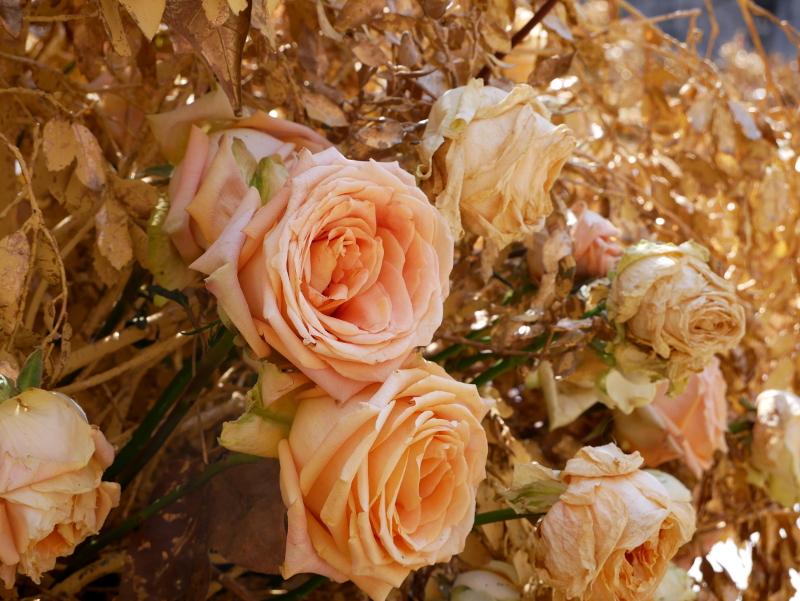 rosen temps de flors