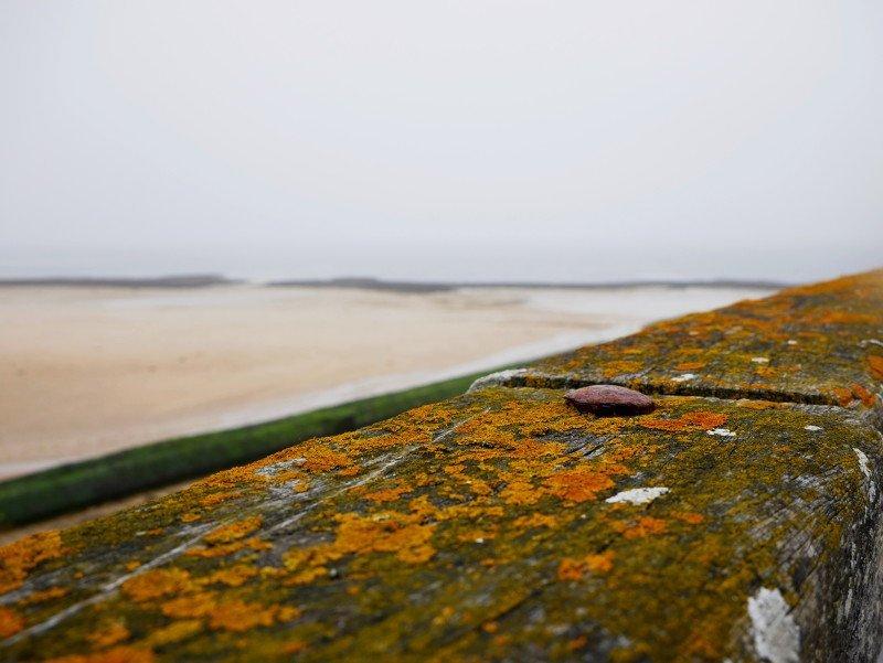 Perlmuttküste
