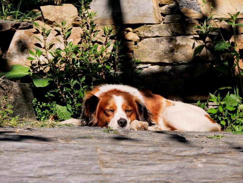 hund cerdeira village portugal