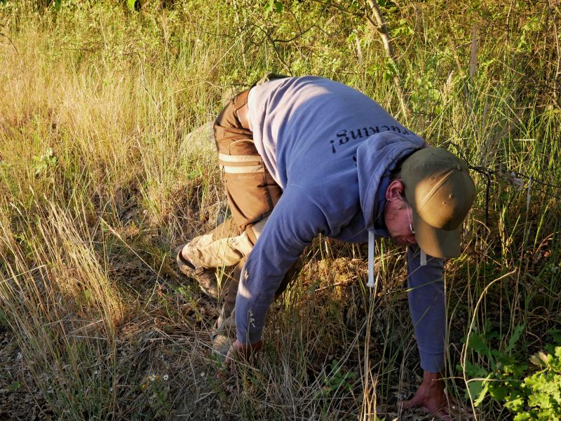 spuren reh wildnisschule flaeming