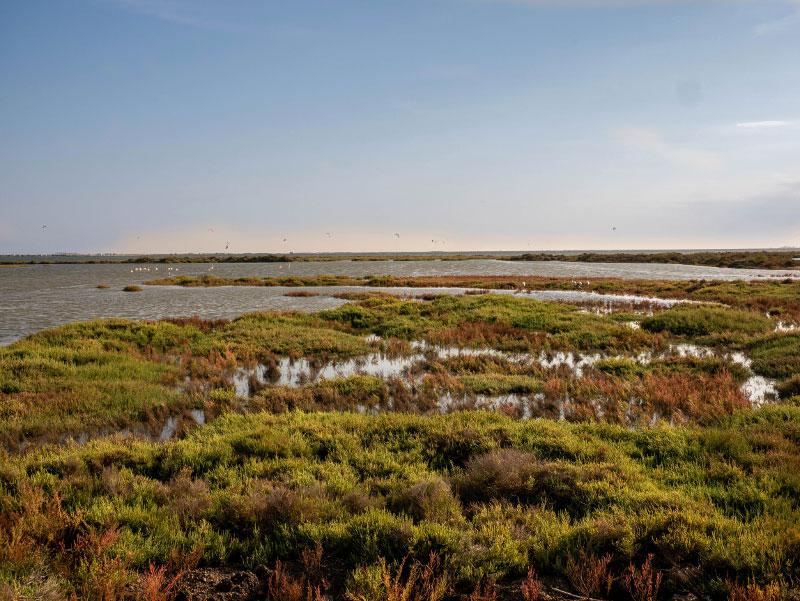 delta flamingos Delta del Ebro