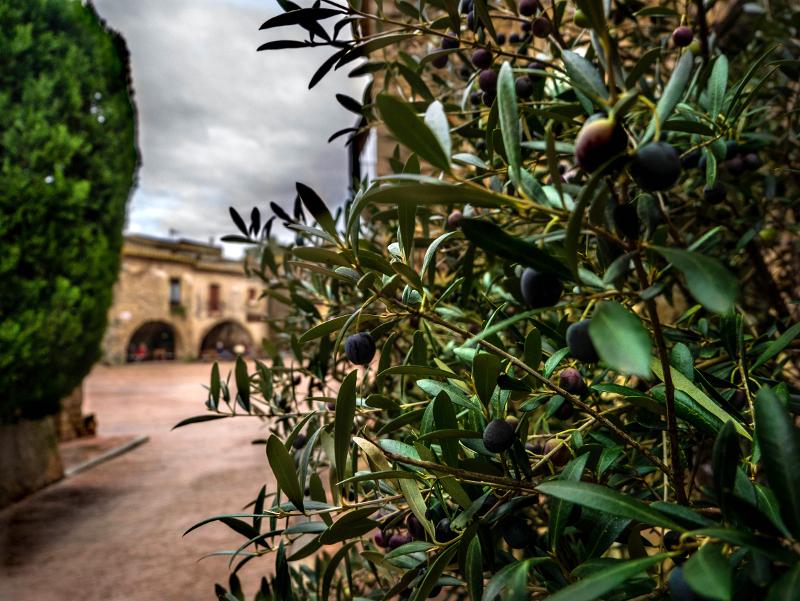 oliven monells november costa brava