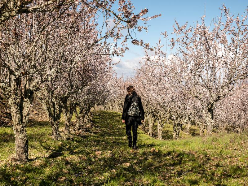 mandlenbäume Castelo Rodrigo aldeias historicas