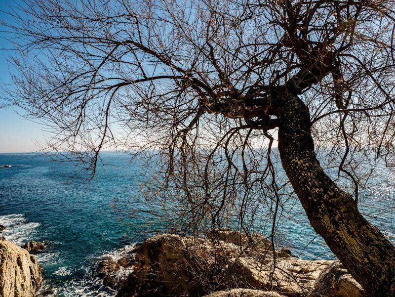 S'Agaró cami de ronda 5 baum platja d aro freibeuter reisen