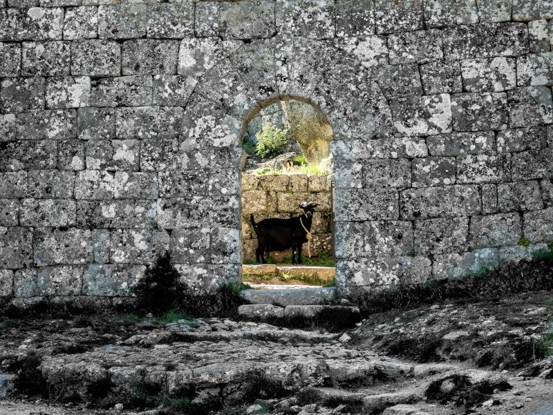 ziege burg monsanto portugal aldeias historicas